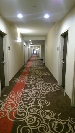 Hampton Inn & Suites Tampa Northwest Oldsmar: Hallways - bright and pleasing