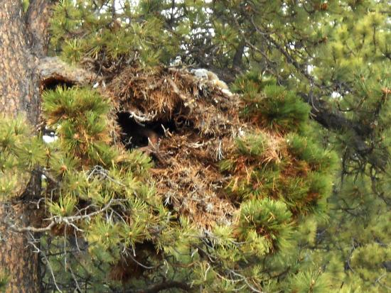 Green Jeep Tours: Owl Nest