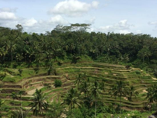 Bali Wau Surf: Day trip to the rice terraces