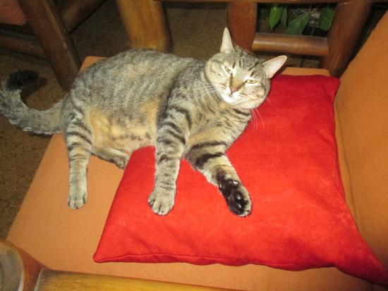 Iguana Hostel: the hostels cat