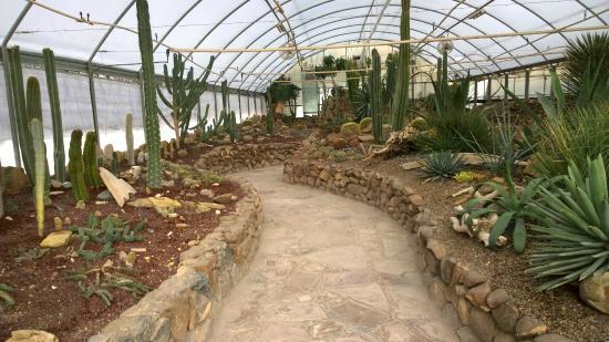 Jard n bot nico picture of museo del desierto saltillo for Jardin del desierto