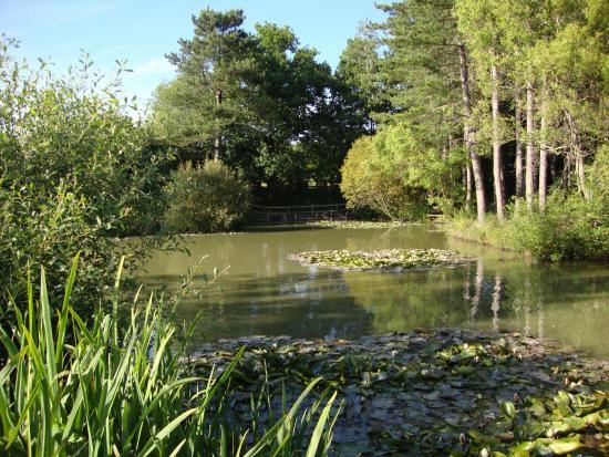 Alderwood Pond