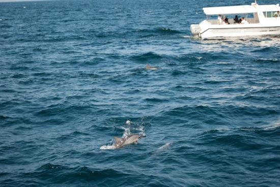 Sidab Sea Tours Muscat