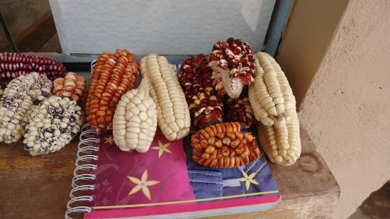 Santuario Animal de Cochahuasi: tipos diferentes de milho do Peru