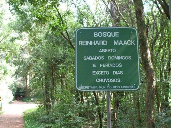 Bosque Reinhard Maack
