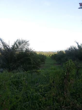 B&B  Residence Las Lajas: Vista dal giardino intorno ai bungalow