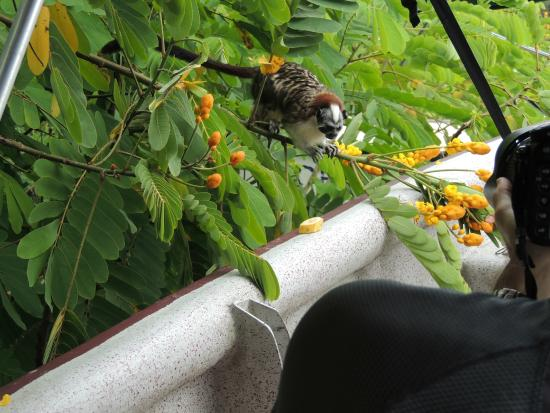 Monkey Lodge Panama: promenade en bateau. Ouistitis