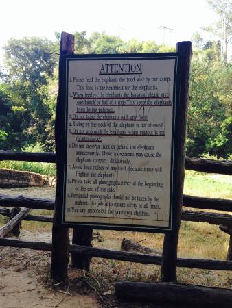 The Elephant Training Center Chiang Dao: the rules