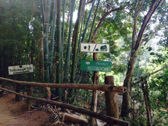 The Elephant Training Center Chiang Dao: towards the show