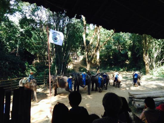 The Elephant Training Center Chiang Dao: chained up elephants for your entertainment!! ugh.