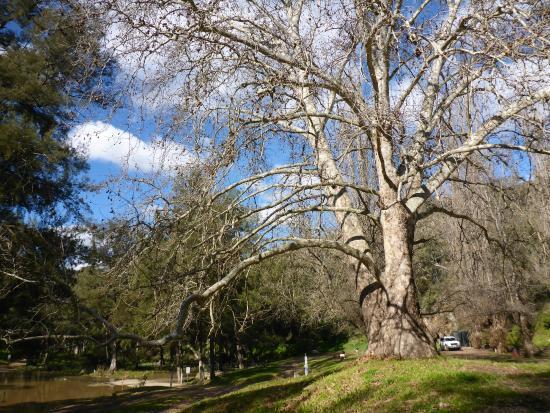 Ophir Reserve