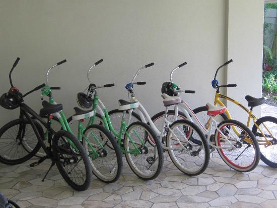 North Shore Bike Rentals: Six beach cruisers rented