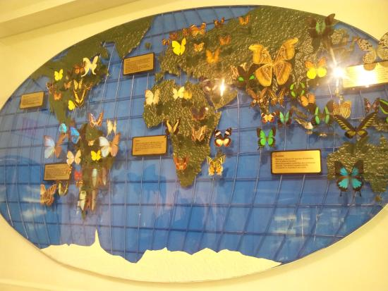 Foto de key west butterfly and nature conservatory key west world key west butterfly and nature conservatory world map with butterfly locations gumiabroncs Image collections