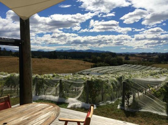 Bronte, New Zealand: At Rimu Grove vineyard