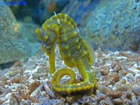 I bellissimi cavallucci marini foto di oltremare - Colorazione cavallucci marini in ...