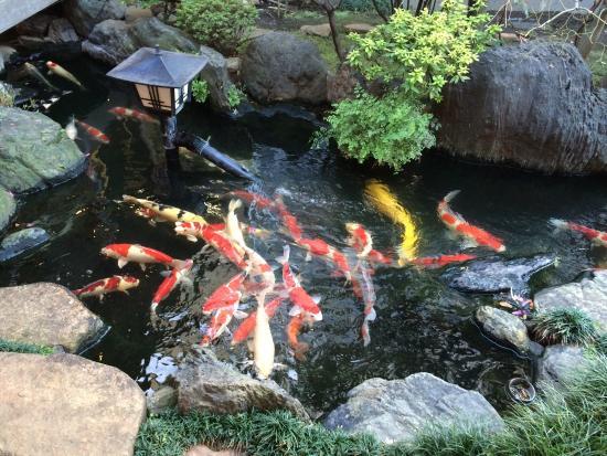 Tachiaigawa Yoshidaya: 立派な鯉