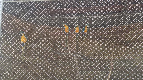 Parque Zoo-botanico da Caatinga: As lindas e raras araras azuis do parque são uma atração à parte.