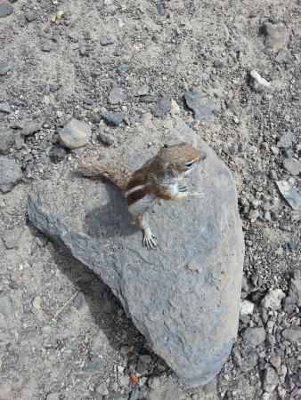 Monte del Mar: Lustige Hörnchen
