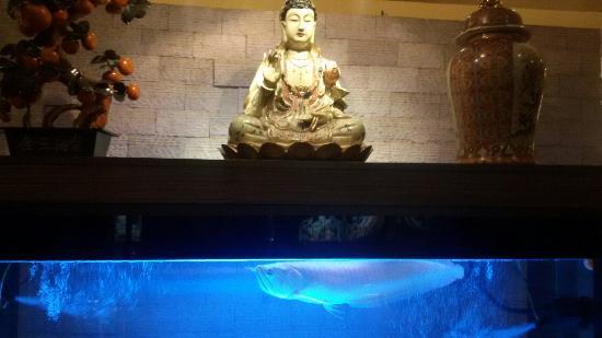 Kowloon House : Aquarium with arowana at the entrance