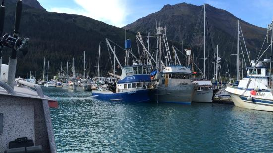 Bear's Den B&B and Lodging: Seward Harbor
