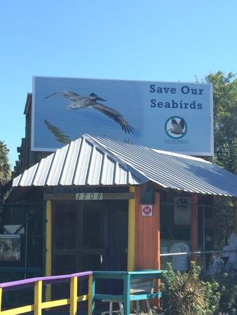 Save Our Seabirds : !!