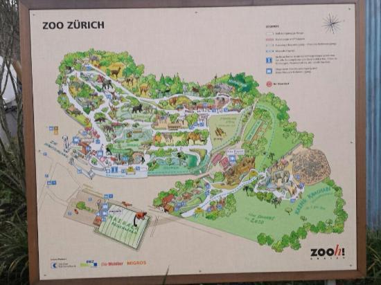 Cartina 5d.Mappa Dello Zoo Picture Of Zoo Zurich Tripadvisor