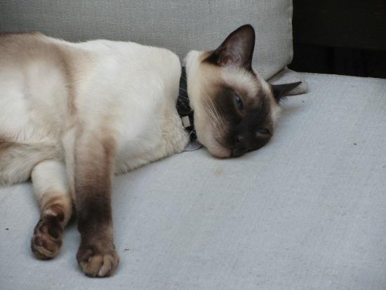 Legado Mitico: The resident cat