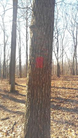 Edwin and Percy Warner Parks: Red blaze along Mossy Ridge Trail