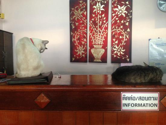 Amantra Resort & Spa : The reception. If you like cats this is the place to be...