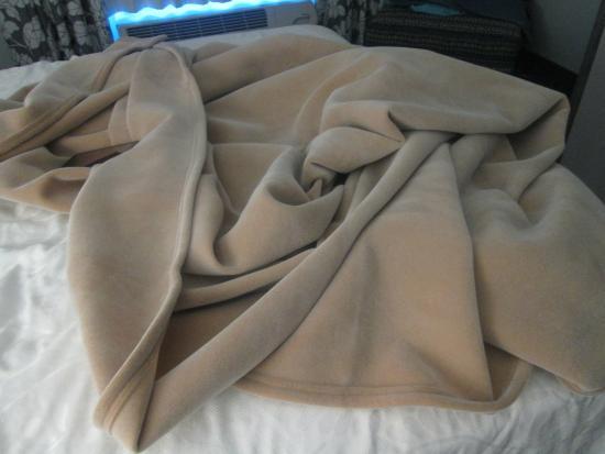 كومفرت إن ويليامسبرج جايتواي: These were the comforters we got..dry and full of static, zapped my arse all night (lol)