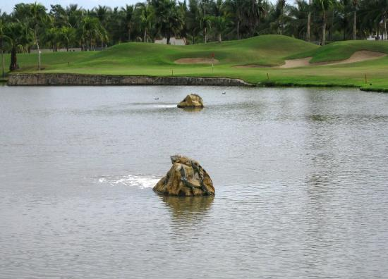 El Tigre Golf at Paradise Village: Iguanas on floating rocks