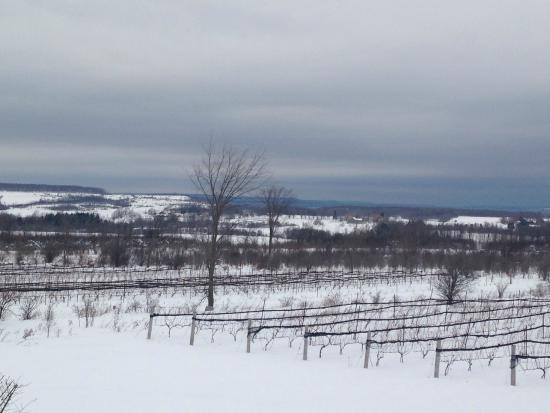 Coffin Ridge Boutique Winery : View of the winery