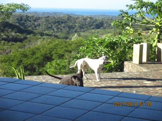 Rio Seco, Costa Rica: Visitors: Goal (black) and Shira.