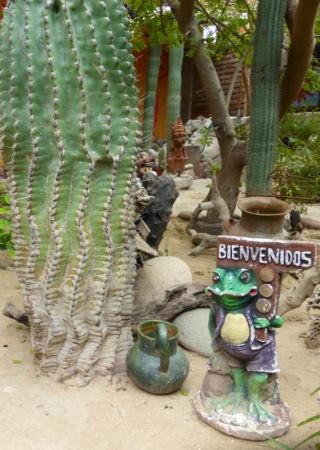 Baja Paradise : beautiful garden