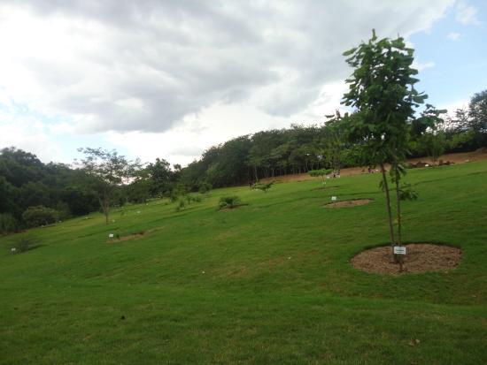 cercas para jardim londrina