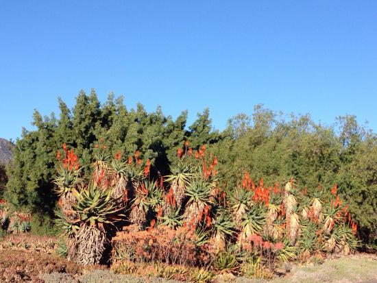 Rose Garden Picture Of Los Angeles County Arboretum