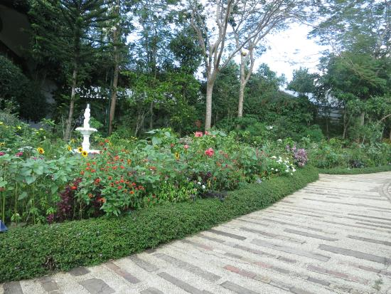Sonya's Garden B&B: Grounds