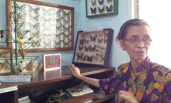 Jumalon Butterfly Sanctuary: The owner giving a personalized tour of the museum