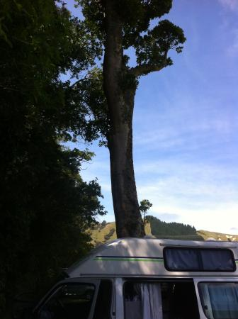Cable Bay Holiday Park: Nice roomy site with trees