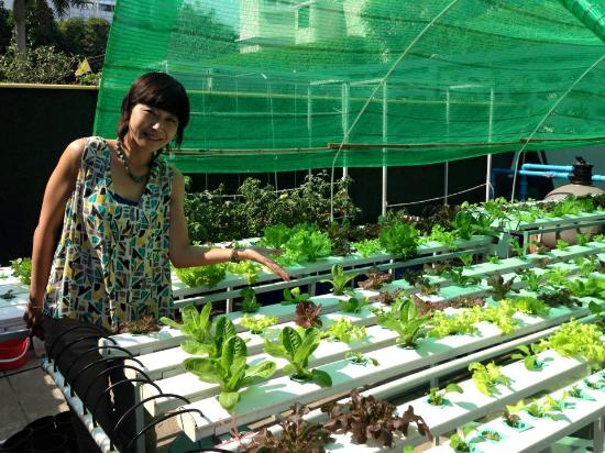 Hydroponic vegetable garden Picture of The Gardens Bangkok