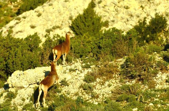 Logis Domaine de Roquerousse : Le terrain de Chasse du Domaine de Roquerousse