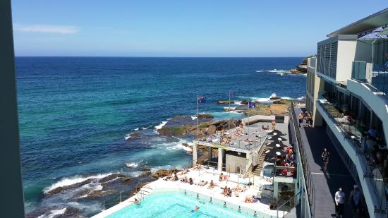 view from the bar - bondi icebergs - picture of icebergs dining