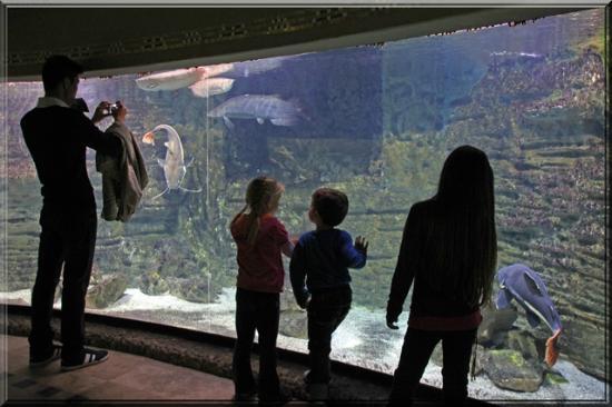 Aquarium Na Slici Je Budapest Zoo Botanical Garden Budimpesta
