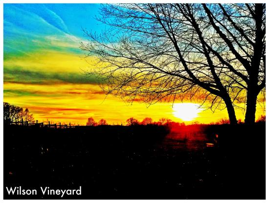 Nottingham, PA: Overlooking the vineyard during a winter sunset.