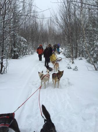 Saint Aime Des Lacs, Canada: en promenade en traineau a chiens