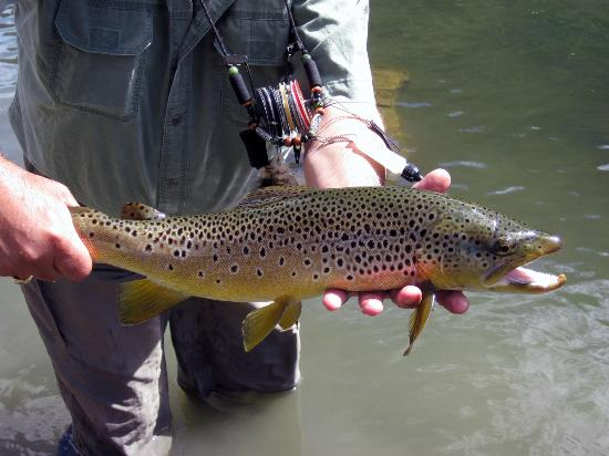 Gardiner, MT: Missouri River brown trout