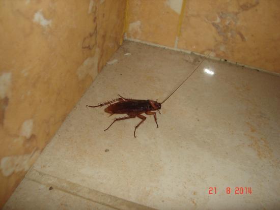 San Agustin, İspanya: Cucaracha en el suelo del baño bajo el lavabo.