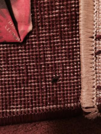 Khalidia Hotel Apartments: Bedbugs