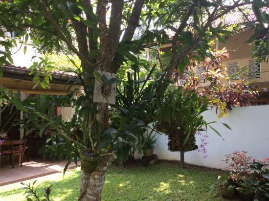 Surf Villa : Orchids