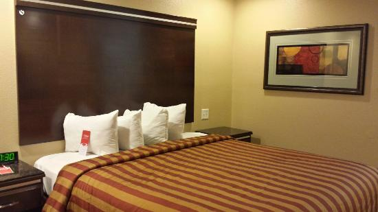 Econo Lodge Inn & Suites Near Legoland: Queen bed